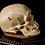 Thumbnail: Human Skull #9316