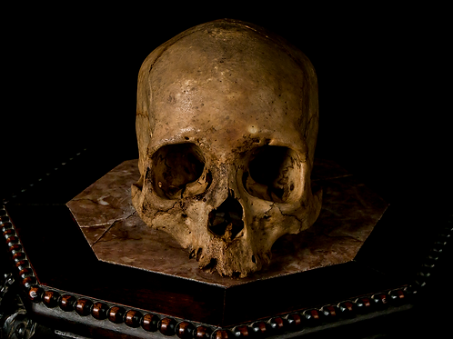 Human Skull #8418