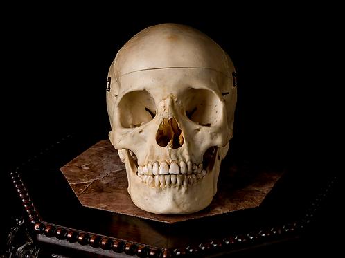 Human Skull #9357