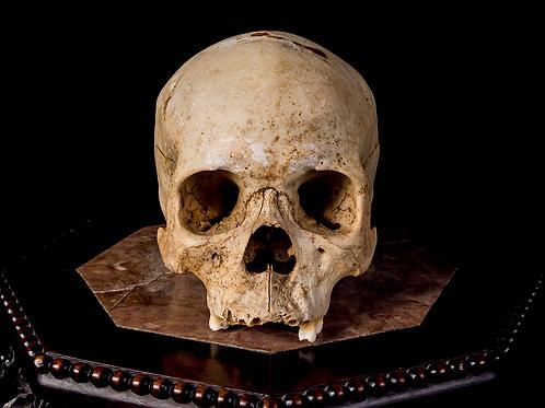 Human Skull #8488