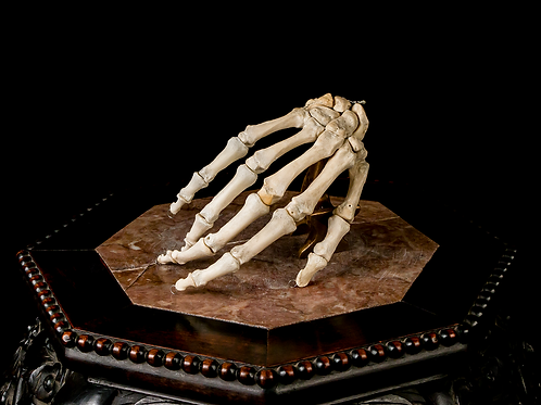 Articulated Human Hand