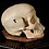 Thumbnail: Human Skull #9474