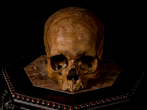 Human Skull #8416
