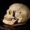 Thumbnail: Human Skull #9371