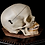Thumbnail: Human Skull #9473, Removable Maxilla