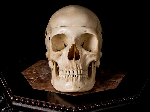 Human Skull #9351