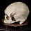 Thumbnail: Human Skull #8432