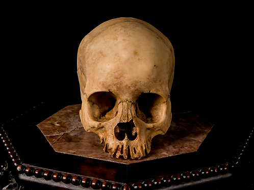 Human Skull #8479