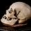Thumbnail: Human Skull #8480
