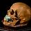 Thumbnail: Human Skull #8493