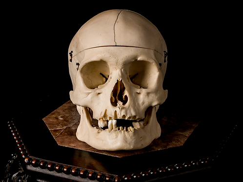 Human Skull #8358