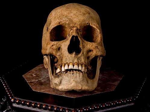 Human Skull #8481