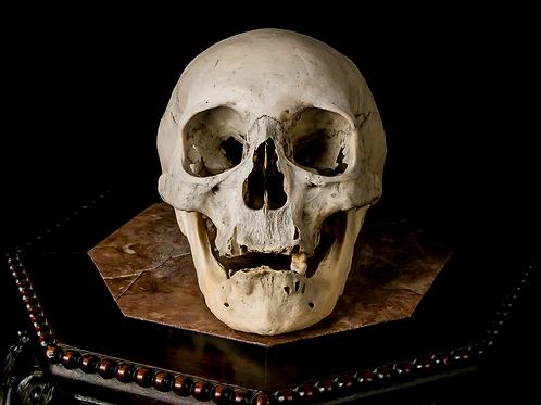 Human Skull #8431