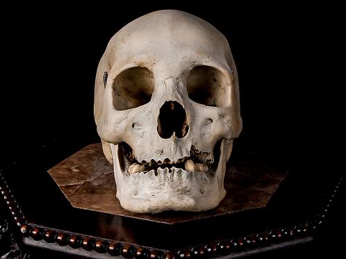 Human Skull #8480