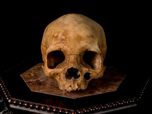 Human Skull #8484