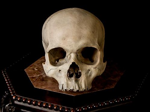 Human Skull #8428