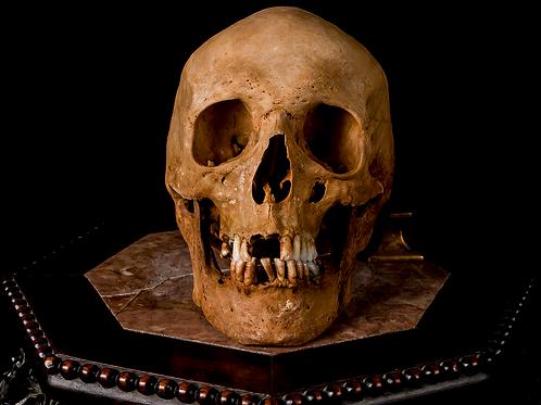 Human Skull #8495