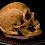 Thumbnail: Human Skull #8492