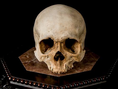 Human Skull #8363