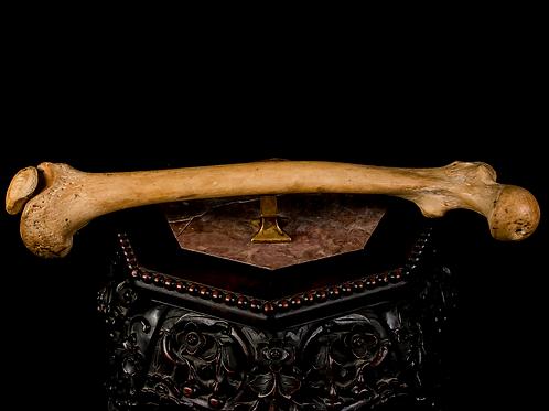 Human Femur, 19th-Century