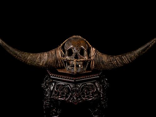 Konyak Nagaland Trophy Skull