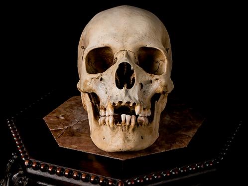 Human Skull #8391