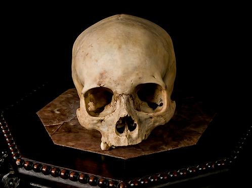 Human Skull #8410