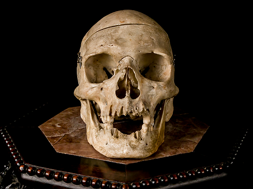 Human Skull #8510