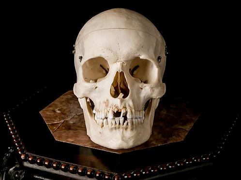 Human Skull #9425