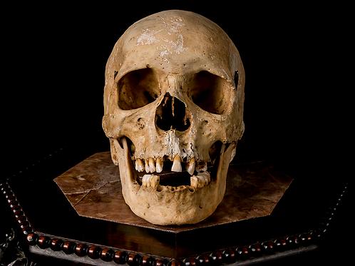 Human Skull #8482