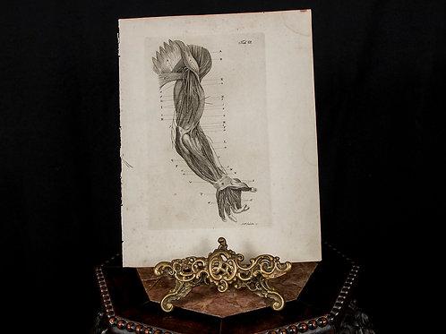 Schroeter 1834 Engraving, Human Arm
