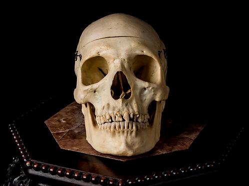 Human Skull #9371