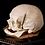Thumbnail: Human Skull #9420