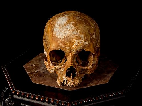 Human Skull #7422