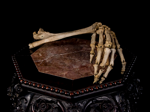 Articulated Human Arm, Partial