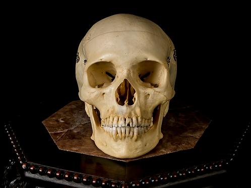 Human Skull #9467