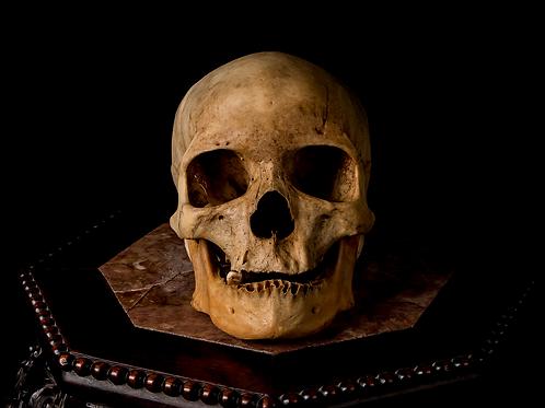 Human Skull #8388