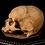 Thumbnail: Human Skull #8490