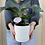 Thumbnail: $40 Plant Pick Me Up!