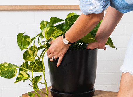 HOW TO WATER YOUR NEW PLANT BABE!