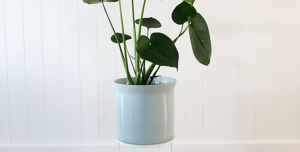 MONSTERA WITH PLANT STAND