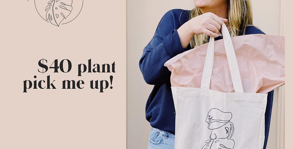 $40 Plant Pick Me Up!