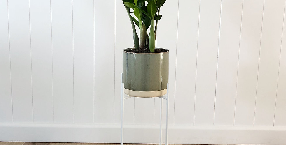 ZZ WITH PLANT STAND