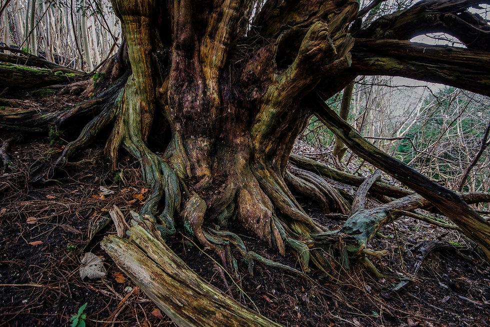 Yew-Druids-2.jpg