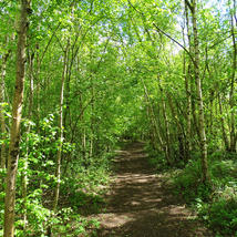 birch pathway.JPG