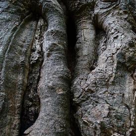 Tree bark 1.JPG