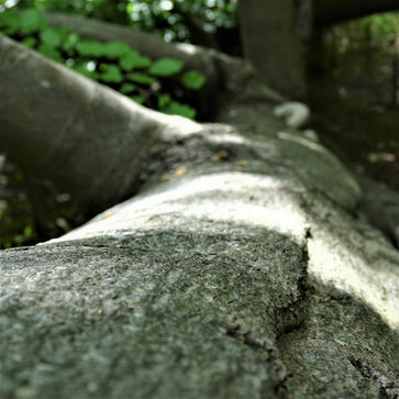 tree bark 2.JPG