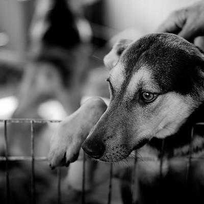 Feira de Adoção de Animais