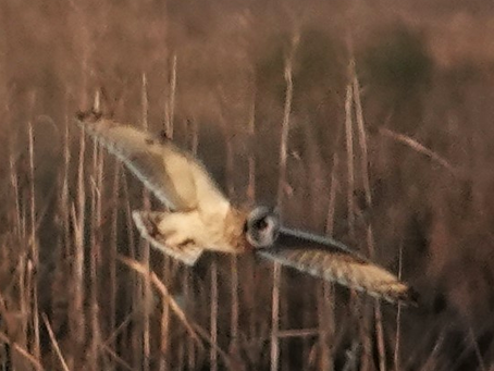 Birding at Fowler Beach January 12