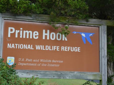 Prime Hook National Wildlife Refuge April 1, 2021